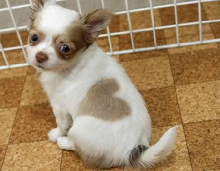dog-heart-birthmark