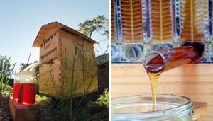 honey-on-tap-flow-hive-stuart-cedar-anderson